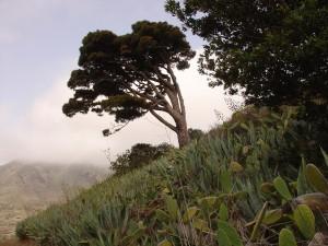 De paseo por El Palmar